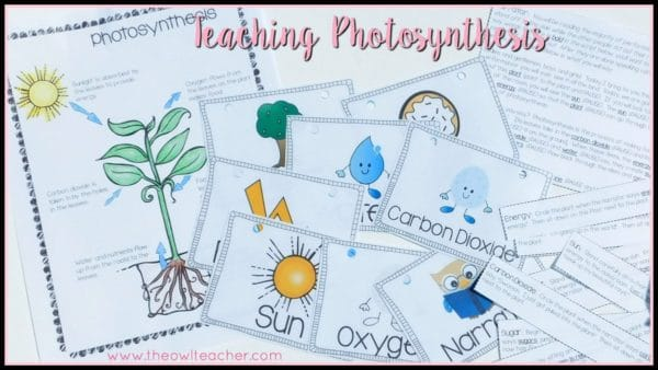 Making photosynthesis engaging to upper elementary the owl teacher photosynthesis is often a challenging topic to teach students because its hard to conceptualize and ccuart Gallery