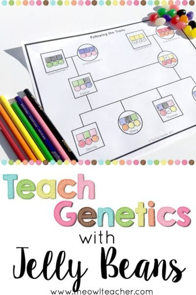 Teach genetics to your students to help them learn about how traits get passed down from parents to their offspring. This fun demonstration that uses jelly beans provides an engaging and concrete way for students to learn this information. Click through to read how to do the experiment and to get a freebie!