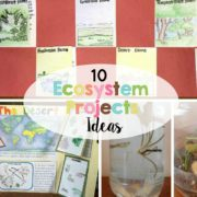 10 Ecosystem Project Ideas