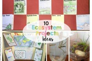 10 Ecosystem Project Ideas